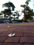 White flowers fallen on floor royalty free stock photo