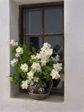 White flowers in an farmhouse window Royalty Free Stock Image