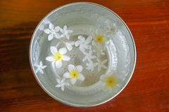 White flowers float in the bowl, Songkran Day, festival of Thail. And Stock Photo