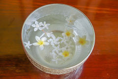 White flowers float in the bowl, Songkran Day, festival of Thail. And Royalty Free Stock Image