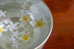 White flowers float in the bowl, Songkran Day, festival of Thailand stock photography