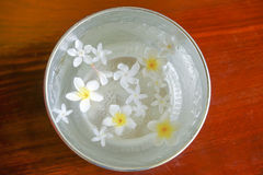 White flowers float in the bowl, Songkran Day, festival of Thailand royalty free stock images