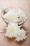 White flowers floating in bowl Royalty Free Stock Photos