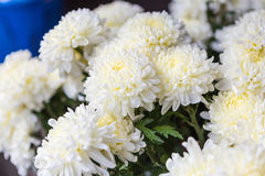 White flowers in flowers markets. Beautiful white flowers in markets Stock Photography