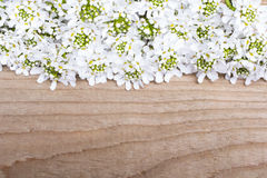 White flowers frame on brown wooden background. Copy space Royalty Free Stock Images