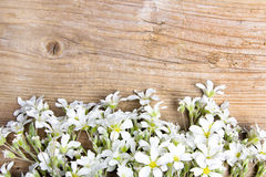White flowers frame on brown wooden background,. Copy space Royalty Free Stock Images