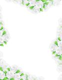 White flowers frame illustration designs Stock Images