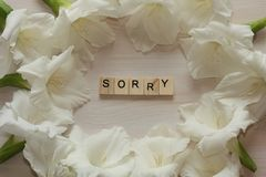 White flowers frame with sorry word. White flowers frame with sorry word on wooden background royalty free stock photography