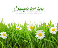 White flowers with fresh grass Royalty Free Stock Photo