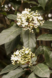 White flowers in full Spring bloom Stock Photos
