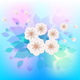 White flowers on a gentle watercolor background. Royalty Free Stock Images