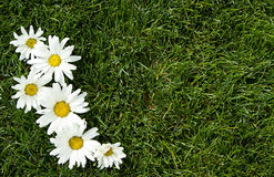 White flowers on grass Stock Photos