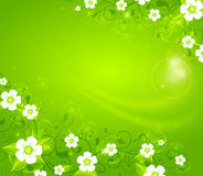 White flowers on green background Stock Photo