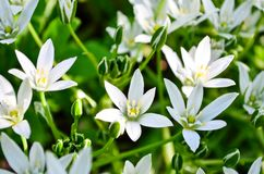 White flowers on a green background. Can be used as a screen saver for a monitor or for a site. stock photography