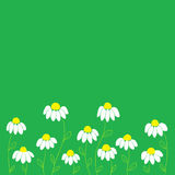 White Flowers on Green Background Stock Image
