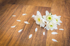 White flowers on ground with petal Stock Photography