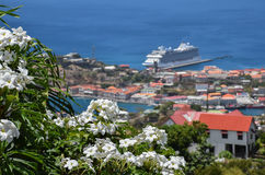 White flowers with harbor view, Grenada, Caribbean Royalty Free Stock Photography
