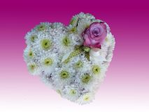 White Flowers Heart. With a purple rose  on purple background Stock Image