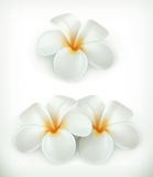 White flowers icons Stock Images
