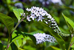 Free White Flowers In Bloom Stock Photos - 7366473