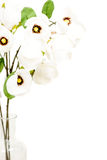 White flowers isolated on white with copy space Royalty Free Stock Images
