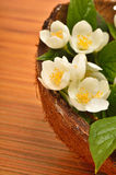 White flowers of jasmine in the coconat shell on the wooden back. Ground Royalty Free Stock Image