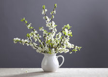 White flowers in the jug Stock Image