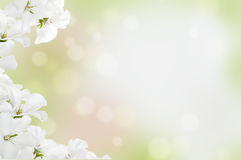 White flowers on a light background Stock Photography