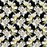 White Flowers of Lily, Madonna Lily. Seamless floral pattern on black background. Stock Photos
