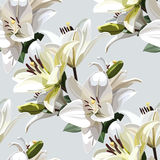 White Flowers of Lily, Madonna Lily. Seamless floral pattern on light background. Royalty Free Stock Photos