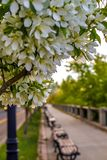 White Flowers Lining A Scenic Pathway royalty free stock photography