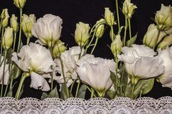 White flowers of Lisianthus with white openwork embroidered border on black plywood stock photos
