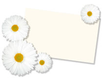 White flowers with message-card Stock Photography