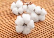 White flowers of natural cotton on bamboo napkin.  stock photos