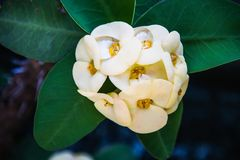 White flowers in natural light royalty free stock photography