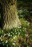 White flowers near a tree Royalty Free Stock Photo