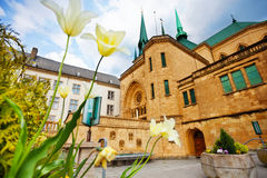White flowers, Notre-Dame Cathedral, Luxembourg Stock Images