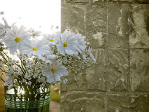 White flowers with old marble wall and sunset close up photo Stock Photo