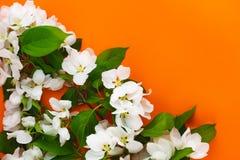 White flowers on orange background. Beautiful greenery floral border. Wild garden backdrop design template