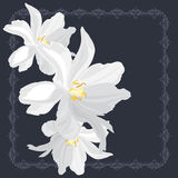 White flowers on the ornamental frame Royalty Free Stock Photography