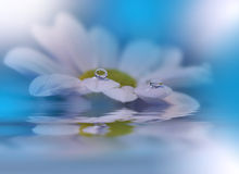 White flowers over water. Stock Photos