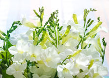 White flowers on pastel background Stock Photos