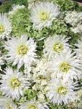 White  flowers pattern Royalty Free Stock Photo
