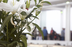 White flowers with people out of focus. Horizontal format Stock Photos