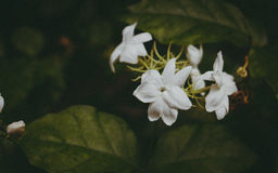 White flowers on plant Stock Photos
