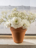 White flowers in pot. White flowers in orange pot Royalty Free Stock Image