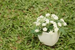 White flowers in pots on the green grass. White flowers in pots on the green grass Stock Photos