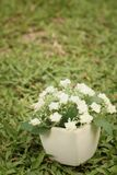 White flowers in pots on the green grass. White flowers in pots on the green grass Royalty Free Stock Photos