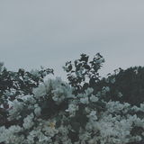 White flowers. Processed with VSCO with a8 preset Stock Photo