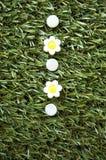 White flowers pushpins Stock Image